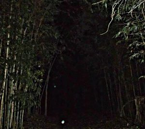Strange orbs caught in path during a Colonial Ghost Tour in Williamsburg, Virginia