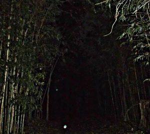 Object caught on camera in dark path