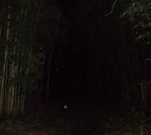 Orbs caught on dark woods path