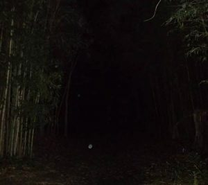 Orbs caught on camera in dark wood path