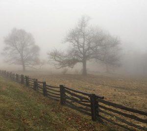 Ghostly fog in a field