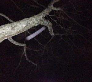 Object moving quickly caught on camera near tree branch